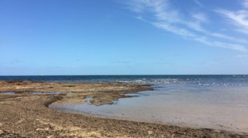 Family adventure – Ricketts Point Marine Sanctuary